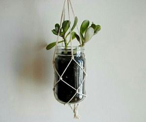 plants, diy, and jar image