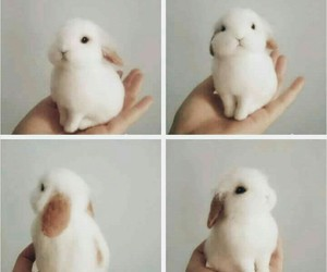 bunny and pretty image