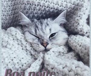 boa, cat, and cinza image