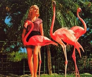 birds, florida, and vintage postcard image
