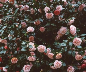 flowers, roses, and wallpaper image
