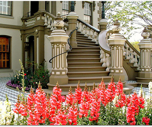 house, flowers, and luxury image