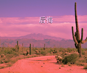 aesthetic, cactus, and desert image