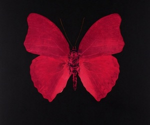 butterfly, red, and grunge image