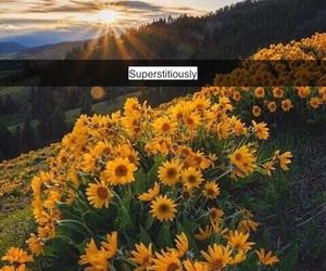 flower, Lyrics, and dnce image