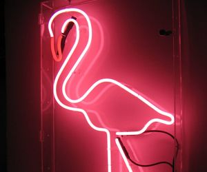 pink, neon, and flamingo image
