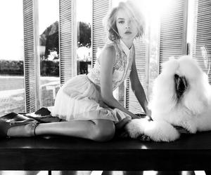 black and white, camy onne, and dog image