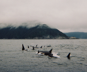 sea, whale, and ocean image