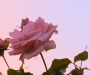 62 Images About Dead Roses On We Heart It