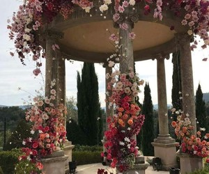 flowers, roses, and location image