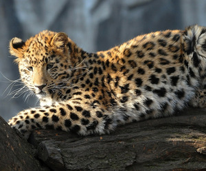 animal, animals, and felines image