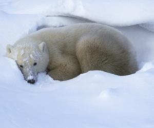 animal, animals, and bear image