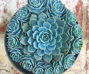 color, plants, and suculentas image