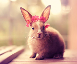 flowers, bunny, and animal image