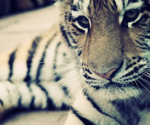 adorable, stripes, and animal image