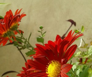 flores, flower, and red image