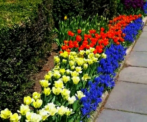 Central Park, color, and Conservatory Garden image