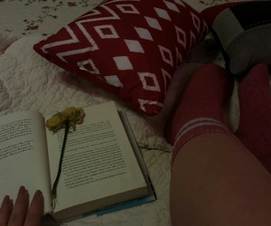 book, rose, and reading image
