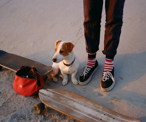 dog and skateboard image