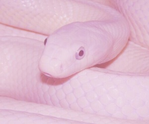aesthetic, reptile, and pink image