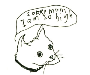 cat, high, and sorry image