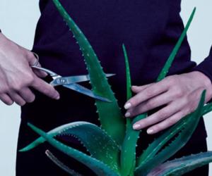 plants and aloe image