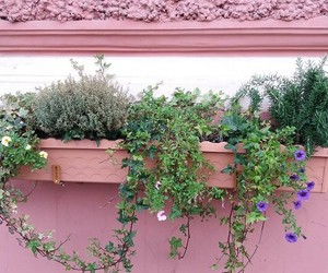 wall, flower box, and pink image