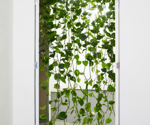 plants, door, and green image