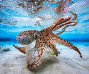 octopus and sea image