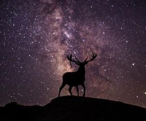 deer and animal image