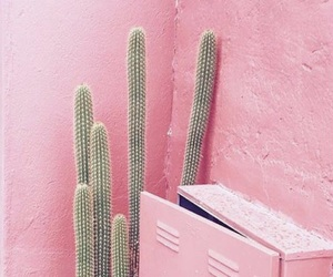 pink, cactus, and nature image