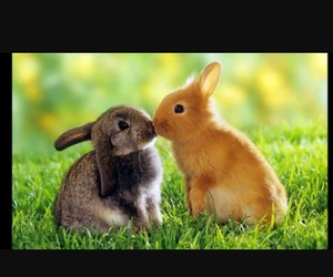 amoureux and lapin image