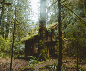 forest, forest house, and woods image