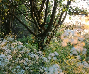green, flowers, and trees image