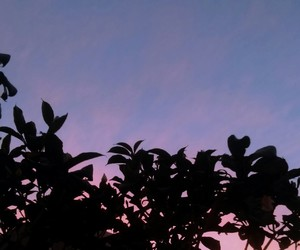 aesthetic, lilac, and pink image