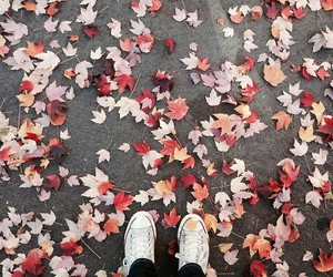 autumn, leaves, and converse image