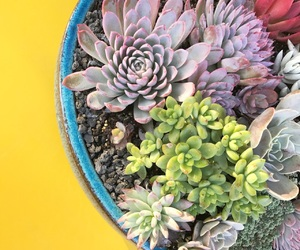 garden, succulents, and yellow image