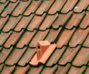 terracotta+ and bird++house image