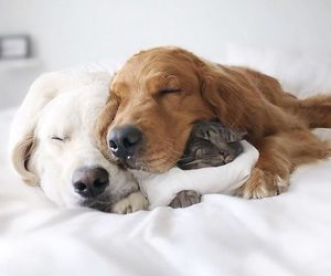 dog, cat, and love image