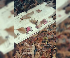 autumn, fall, and book+ image