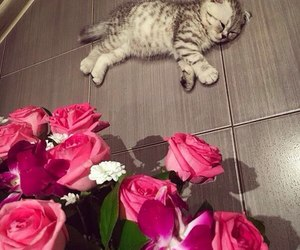 pink, cat, and roses image