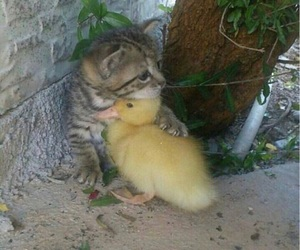 animals, beautiful, and cats image