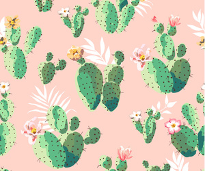 background, cacti, and plant image