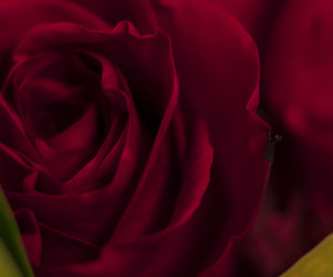 february, petals, and red image