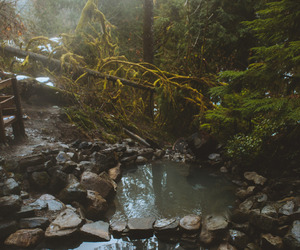 explore, forest, and lake image