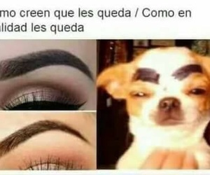 humor, funny, and cejas image