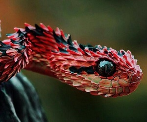 red, snake, and animal image