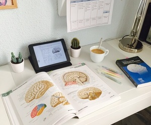 medicine, notes, and study image