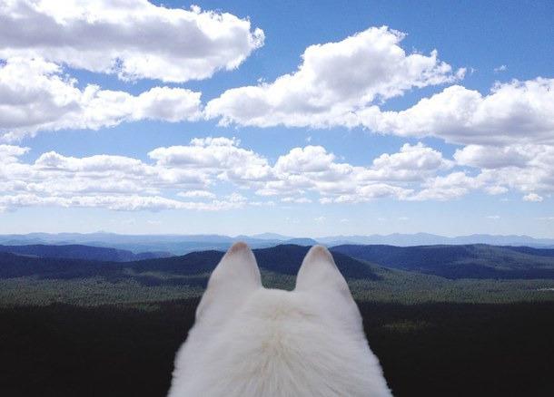 dog, animal, and adventure image