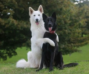animals and dogs image